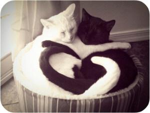 Katten zwart en wit