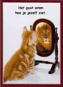 Kat voor spiegel